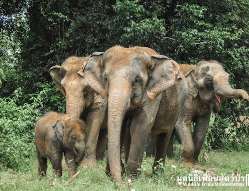 WFFT Elephant Herd Update