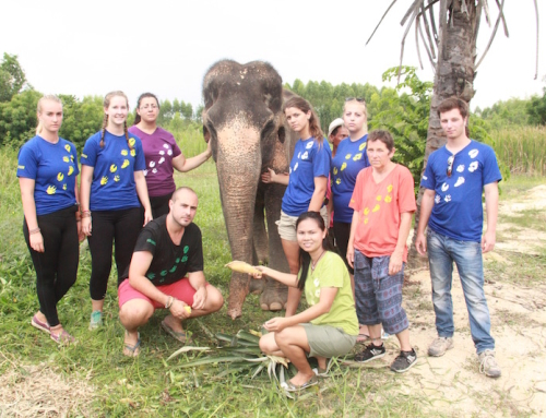 Rescue of Rung Thip the elephant!