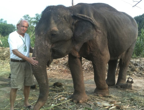 See Puak the Elephant is Rescued