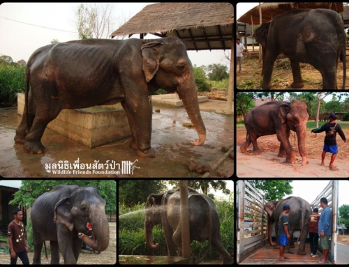 Today Marks 5 Years Since See Puak's Rescue!!!