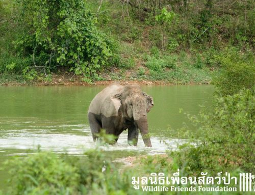 Kui Buri National Park Volunteer Trip