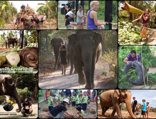 ***Newly opened position – Assistant Elephant Volunteer Coordinator***