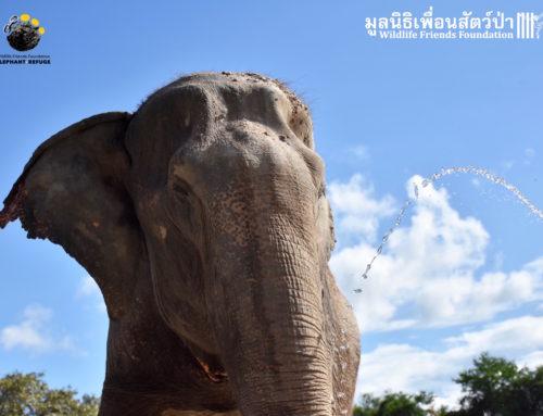 Update – Nam Phon