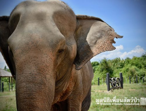 Some Exciting Enrichments for the WFFT Elephants!!