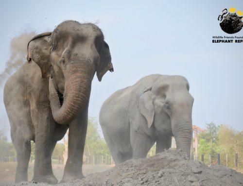 Happy World Elephant Day!!!