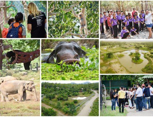 WFFT Position Opening – Tour and Education Guide มูลนิธิเพื่อนสัตว์ป่าเปิดรับสมัครมัคคุเทศก์ด้านการศึกษา 1 ตำแหน่ง
