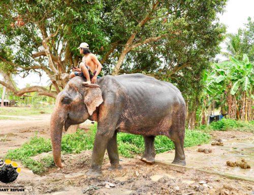 URGENT FUNDRAISING APPEAL – ELEPHANT NEEDS HELP!