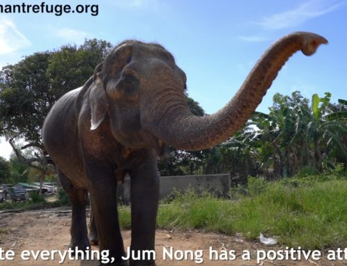🔊VIDEO: Jum Nong's Rescue