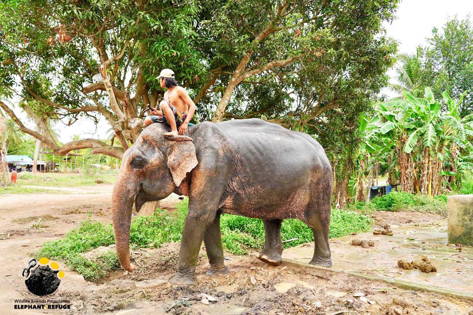 Jum Nong - Thai Elephant Refuge