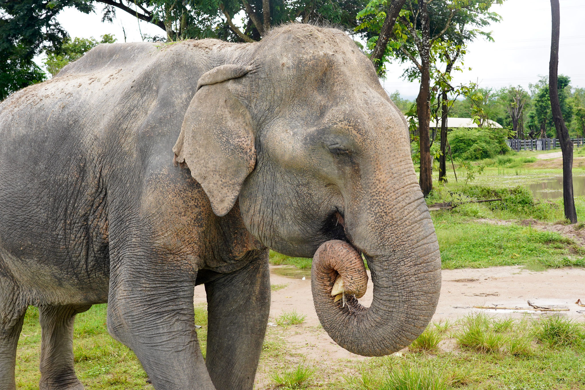 Adopt JumNong at Thai Elephant Refuge