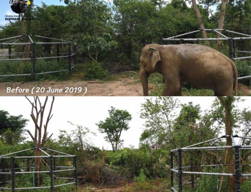 Update – Side Enclosure for Khan Kluey and Somboon