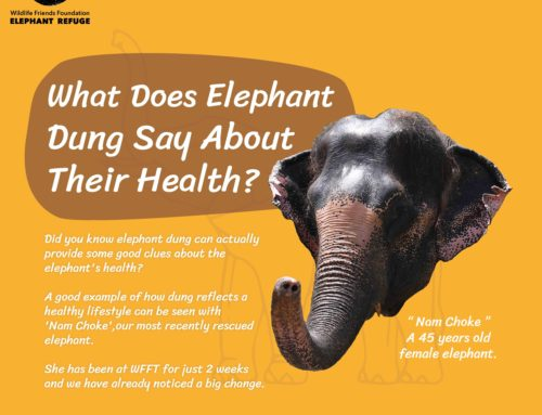 What Does Elephant Dung Say About Their Health?