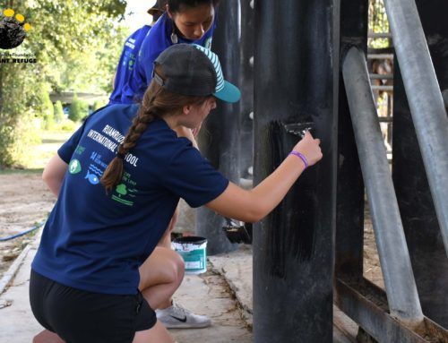 Ruamrudee International School Volunteering At WFFT Elephant Refuge