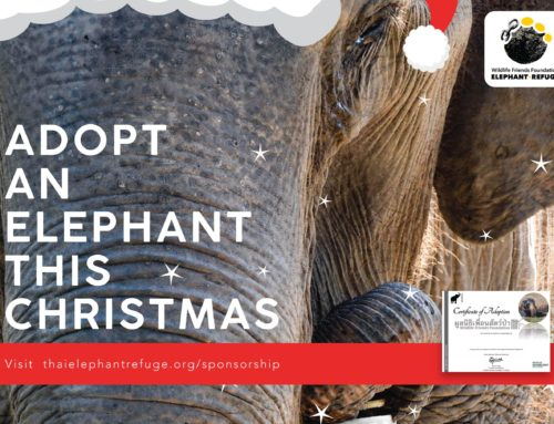 Adopt An Elephant This Christmas