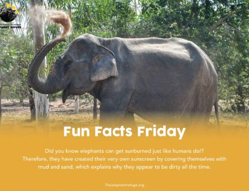 Fun Facts Friday