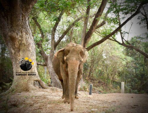 Happy Thai Elephant Day !! สุขสันต์วันช้างไทยค่ะ !!